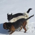 Kompetenshöjning hundar eller hjälp med lydnad